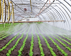 inside greenhouse irrigation system